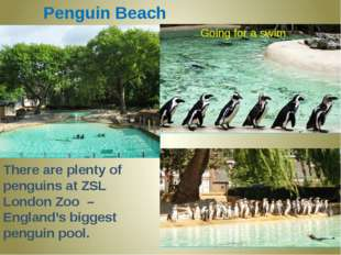 Penguin Beach There are plenty of penguins at ZSL London Zoo – England's bigg