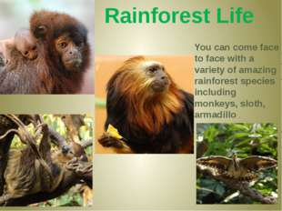 Rainforest Life You can come face to face with a variety of amazing rainfores