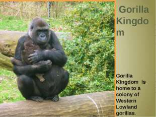 Gorilla Kingdom Gorilla Kingdom is home to a colony of Western Lowland goril