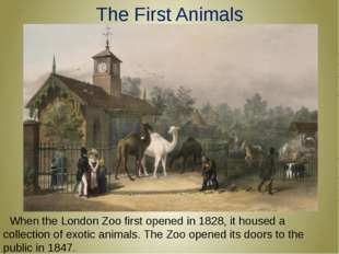 The First Animals  When the London Zoo first opened in 1828, it housed a coll