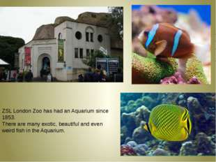 ZSL London Zoo has had an Aquarium since 1853. There are many exotic, beauti