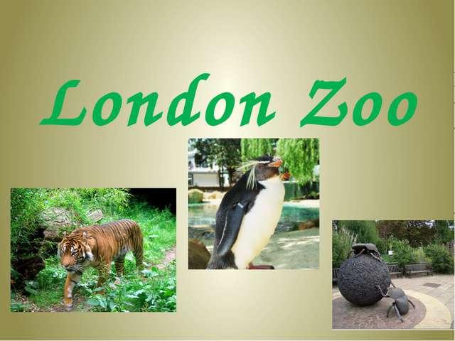 Презентация london zoo 6 класс