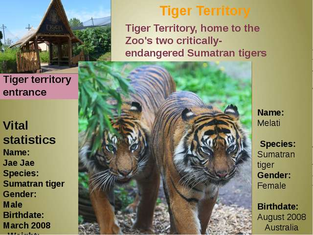 Tiger Territory Tiger territory entrance Vital statistics Name: Jae Jae Speci...