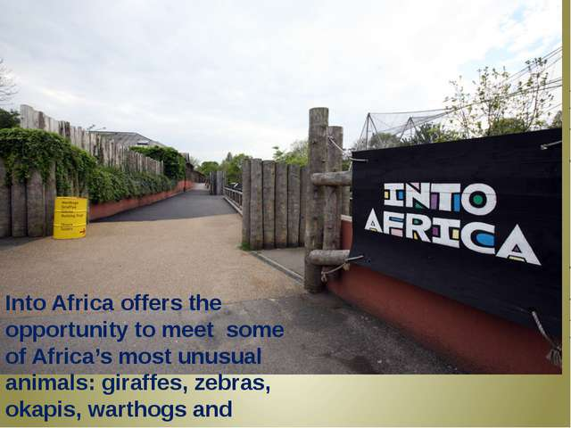 Into Africa offers the opportunity to meet some of Africa's most unusual ani...