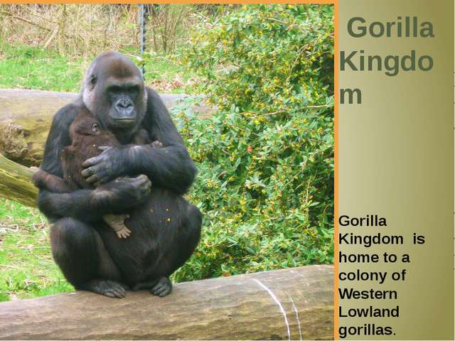Gorilla Kingdom Gorilla Kingdom is home to a colony of Western Lowland goril...