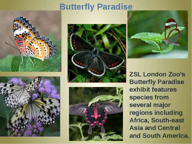 Butterfly Paradise ZSL London Zoo's Butterfly Paradise exhibit features speci...