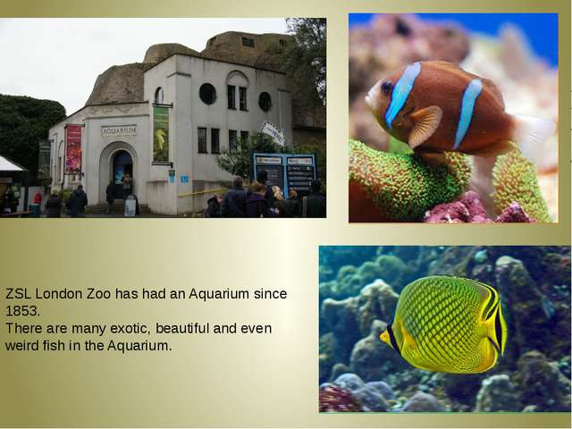 ZSL London Zoo has had an Aquarium since 1853. There are many exotic, beauti...