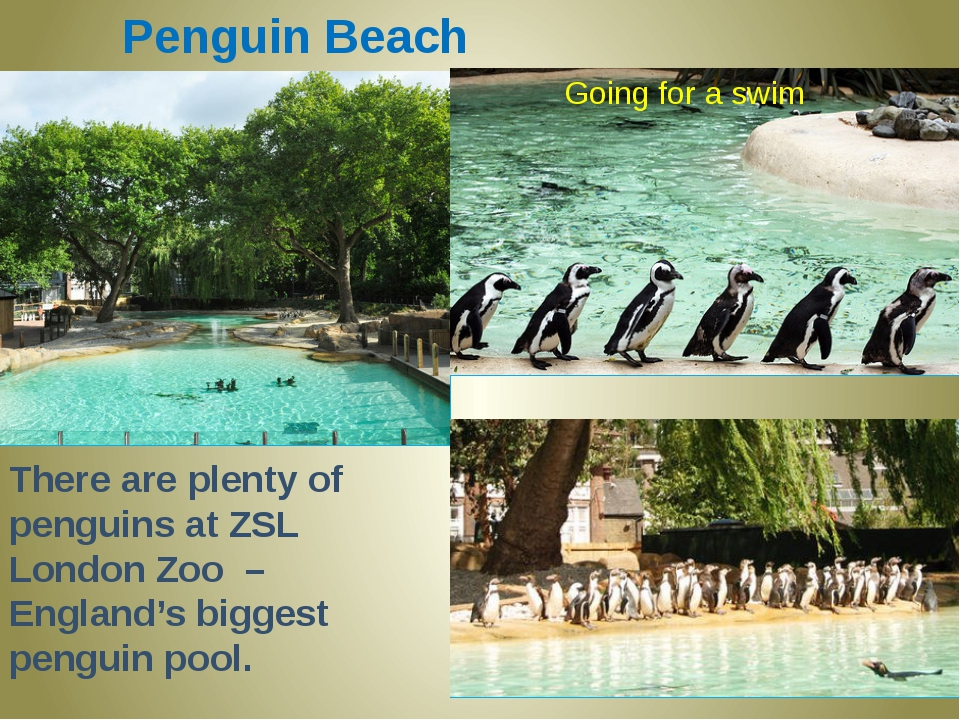 Penguin Beach There are plenty of penguins at ZSL London Zoo – England's bigg...