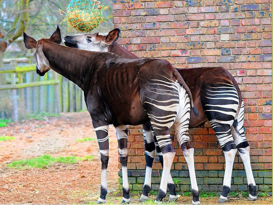 animalsglobe.ru/londonskij-zoopark/
