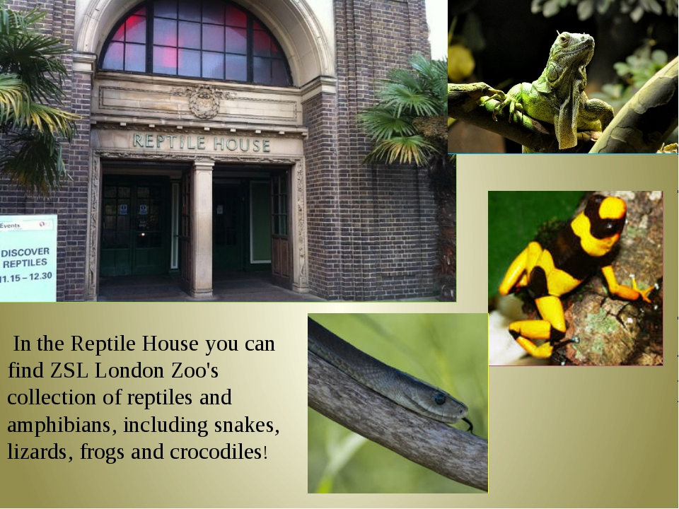 In the Reptile House you can find ZSL London Zoo's collection of reptiles an...