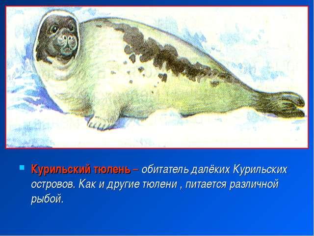 Все о тюленях и их рисунки
