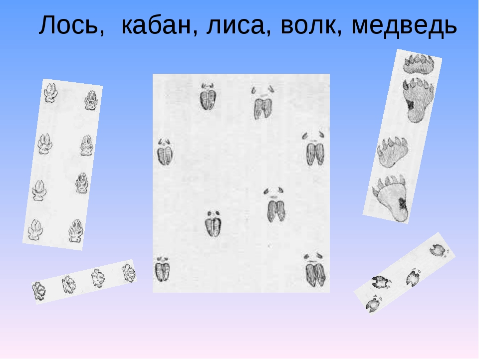 Лось, кабан, лиса, волк, медведь
