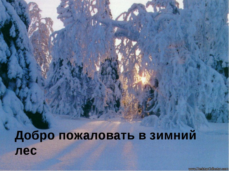 Добро пожаловать в зимний лес
