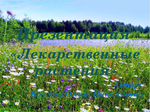 Автор: Каузова Ольга Николаевна Презентация «Лекарственные растения»