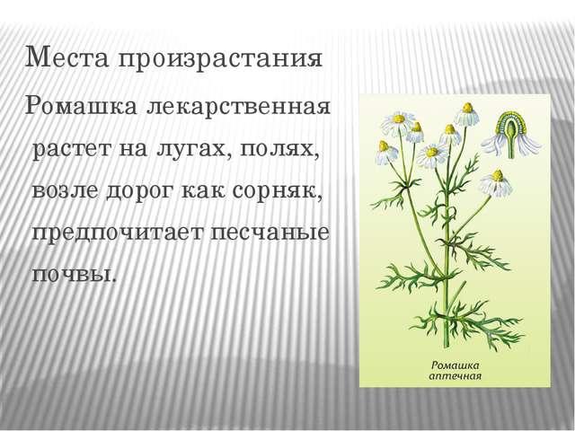 Места произрастания Ромашка лекарственная растет на лугах, полях, возле дорог...