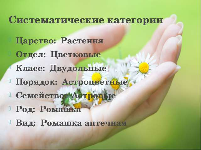 Систематические категории Царство: Растения Отдел: Цветковые Класс: Двудол...
