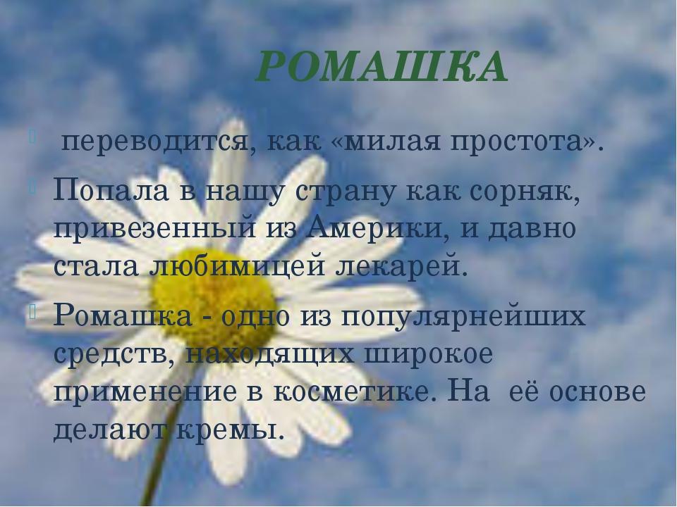РОМАШКА переводится, как «милая простота». Попала в нашу страну как сорняк,...