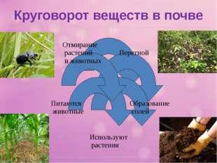 Круговорот веществ в почве
