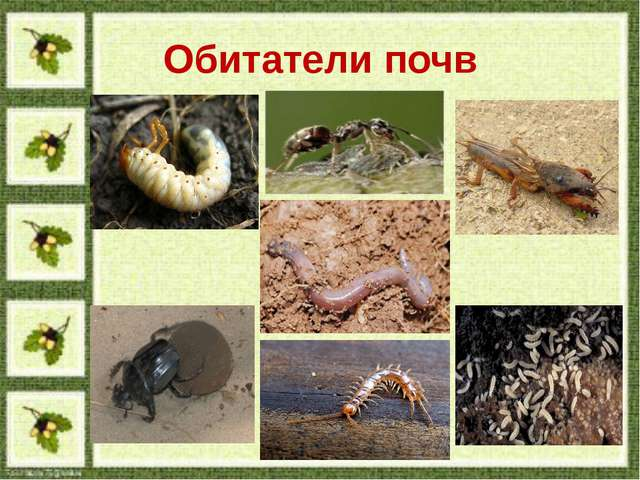 Обитатели почв