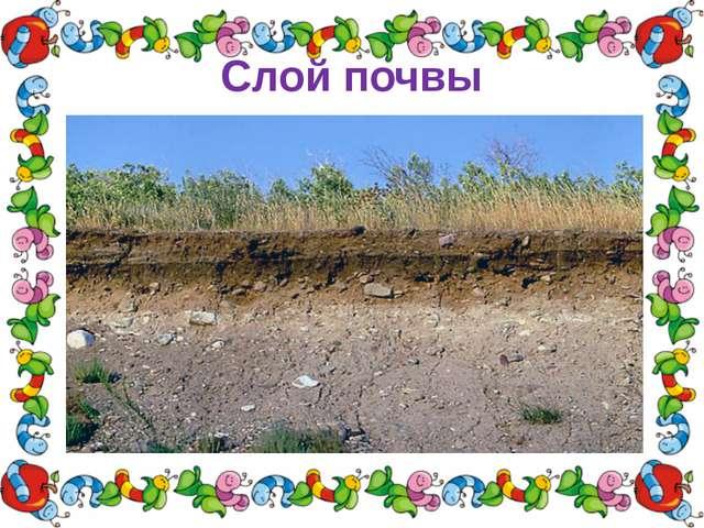 Слой почвы