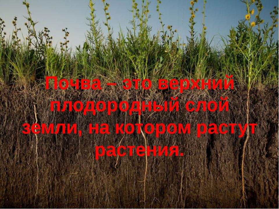 Почва – это верхний плодородный слой земли, на котором растут растения.
