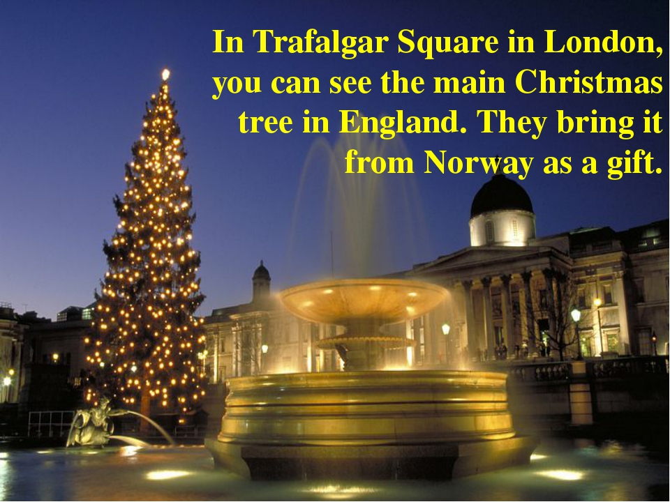 In Trafalgar Square in London, you can see the main Christmas tree in England...