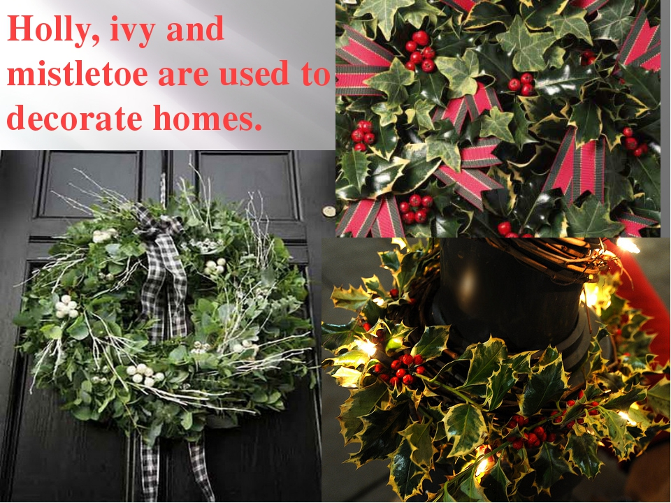 Holly, ivy and mistletoe are used to decorate homes.