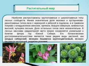 Растительный мир Наиболее распространены крупнотравные и широкотравные типы