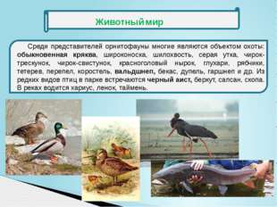 Среди представителей орнитофауны многие являются объектом охоты: обыкновенна