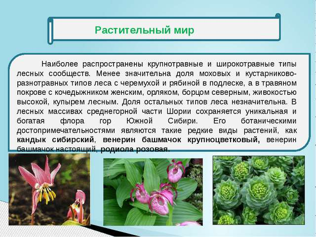 Растительный мир Наиболее распространены крупнотравные и широкотравные типы...