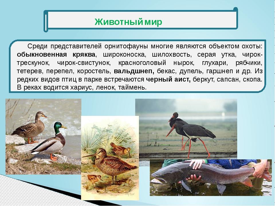 Среди представителей орнитофауны многие являются объектом охоты: обыкновенна...