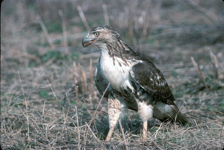 bird60