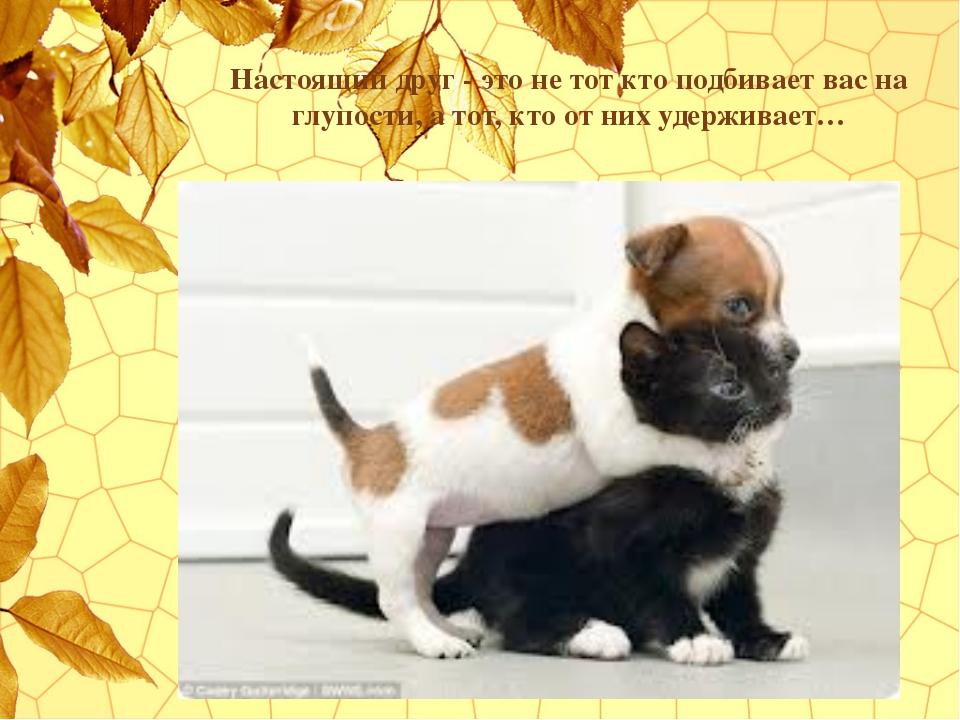 Настоящий друг - это не тот кто подбивает вас на глупости, а тот, кто от них...