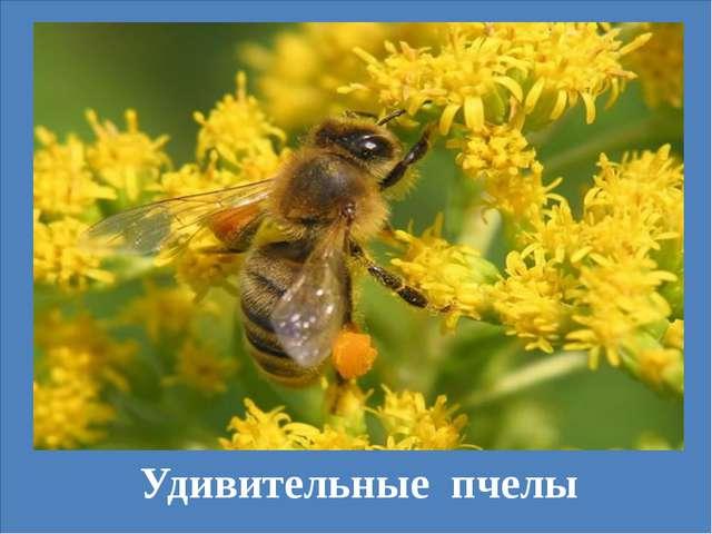 Удивительные пчелы