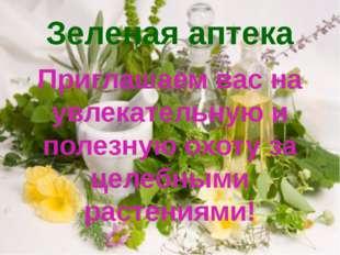 Зеленая аптека Приглашаем вас на увлекательную и полезную охоту за целебными