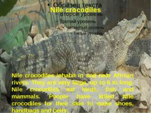 Nile crocodiles Nile crocodiles inhabit in and near African rivers. They are