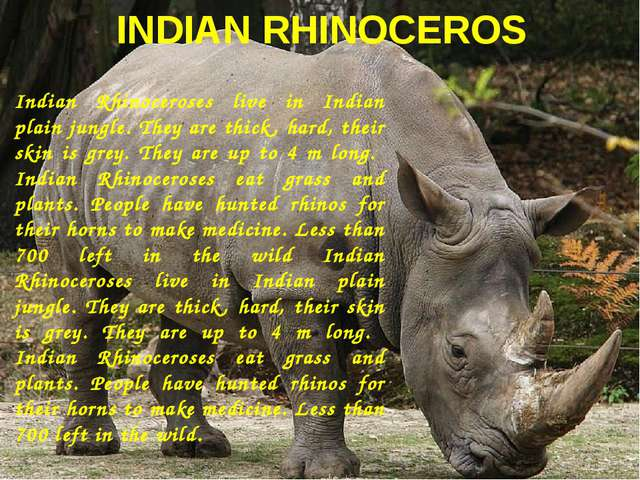 INDIAN RHINOCEROS Indian Rhinoceroses live in Indian plain jungle. They are t...