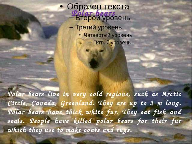 Polar bears Polar bears live in very cold regions, such as Arctic Circle, Can...