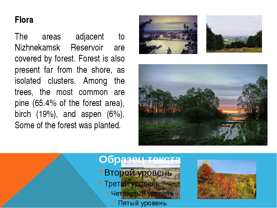 Flora The areas adjacent to Nizhnekamsk Reservoir are covered by forest. Fore...