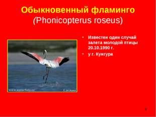 * Обыкновенный фламинго (Phonicopterus roseus) Известен один случай залета мо