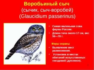 * Воробьиный сыч (сычик, сыч-воробей) (Glaucidium passerinus) Самая маленькая