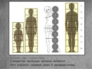 Рост ребенка равен 5 размерам головы. Рост взрослого человека равен 8 размера