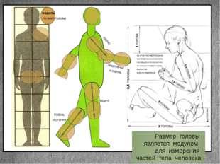 Размер головы является модулем для измерения частей тела человека. Заголовок