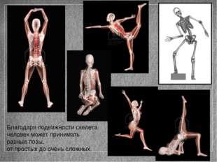 Благодаря подвижности скелета человек может принимать разные позы, от простых
