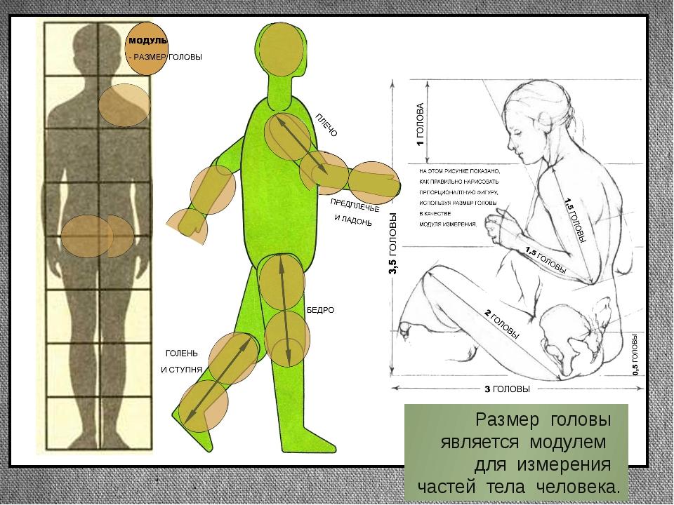 Размер головы является модулем для измерения частей тела человека. Заголовок...