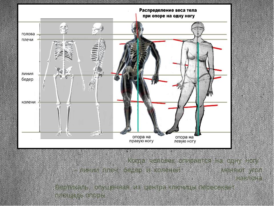 Когда человек опирается на одну ногу – линии плеч, бедер и коленей меняют уго...