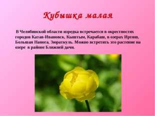 Кубышка малая В Челябинской области изредка встречается в окрестностях городо