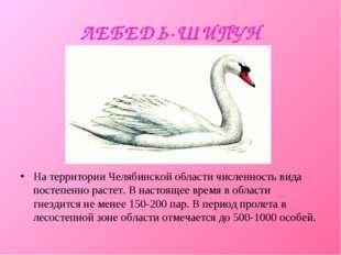 ЛЕБЕДЬ-ШИПУН На территории Челябинской области численность вида постепенно ра