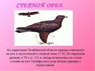 СТЕПНОЙ ОРЕЛ На территории Челябинской области изредка отмечается на юге в ле