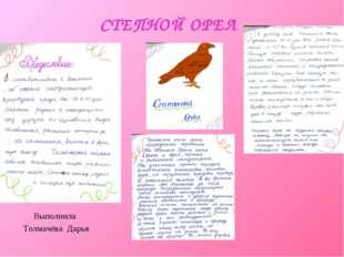 СТЕПНОЙ ОРЕЛ Выполнила Толмачёва Дарья